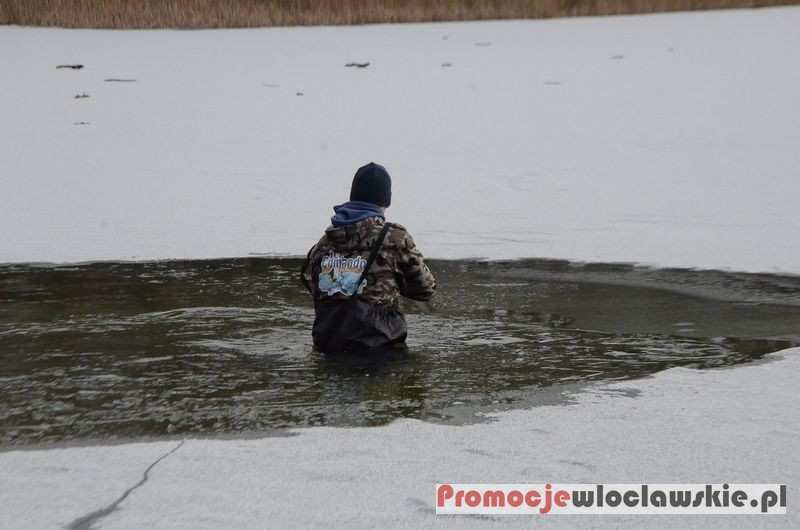 Pływanie, Morsy jeziorze Skrzyneckim Gmina Baruchowo - zdjęcie, fotografia