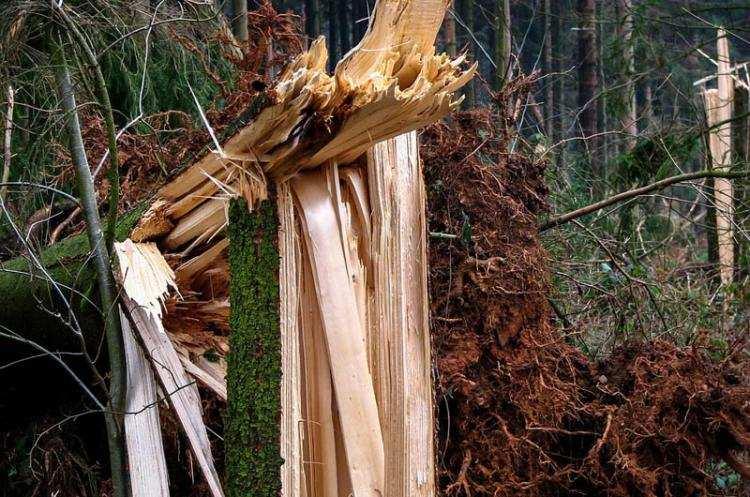 Ludzie_, Silny wiatr powalone drzewa Strażacy interweniowali regionie - zdjęcie, fotografia
