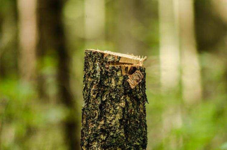 Informacje lokalne, Wypadek pracy podczas wycinki drzew Mężczyzna trafił szpitala - zdjęcie, fotografia