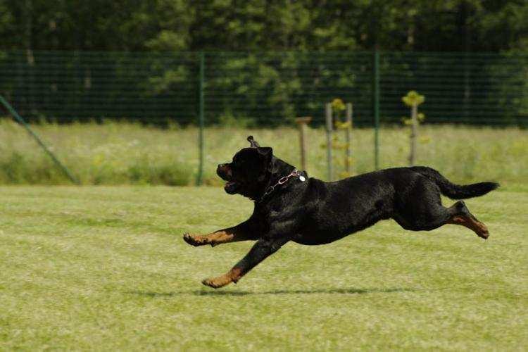 Ludzie_, Rottweiler zaatakował latka Kowalu właściciel odpowie - zdjęcie, fotografia