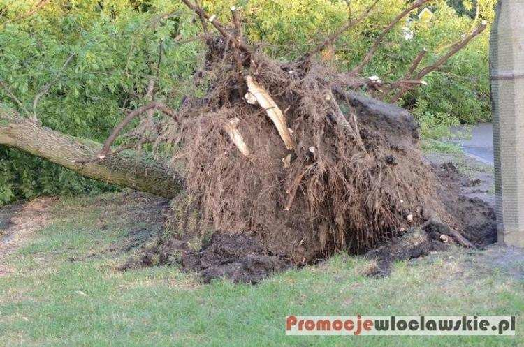 Ludzie_, Orkan Ksawery szaleje Polską Skutki silnego wiatru Włocławku okolicach - zdjęcie, fotografia