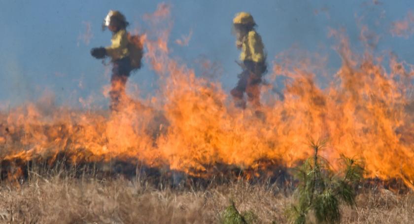 Pożary interwencje straży , Pożar zboża Gminie Choceń Właściciel dziękuje - zdjęcie, fotografia