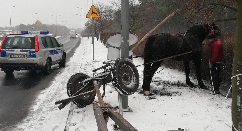 Sprawy kryminalne - kronika, Policyjna pogoń koniem Włocławku [ZDJĘCIA] - zdjęcie, fotografia