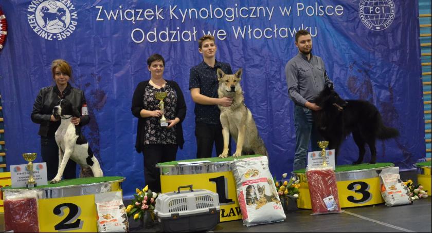 Wystawy, Zimowa wystawa psów rasowych Choceniu [ZDJĘCIA] - zdjęcie, fotografia