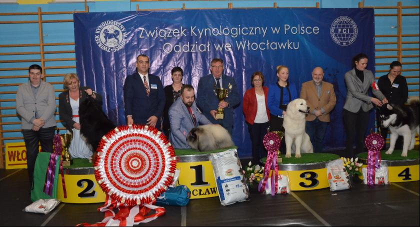 Rozrywka, Ponad tysiąc psów Choceniu Zobacz zwycięzców [ZDJĘCIA] - zdjęcie, fotografia