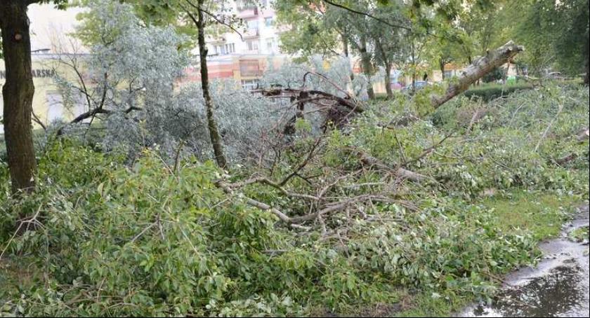 Ludzie_, Powalone drzewo uszkodziło linię energetyczną Brześciu Kujawskim długo potrwa awaria - zdjęcie, fotografia