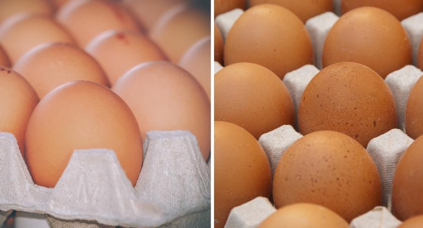 Komunikaty, Salmonella jajach Biedronki Sklepy wycofały partię produktów - zdjęcie, fotografia