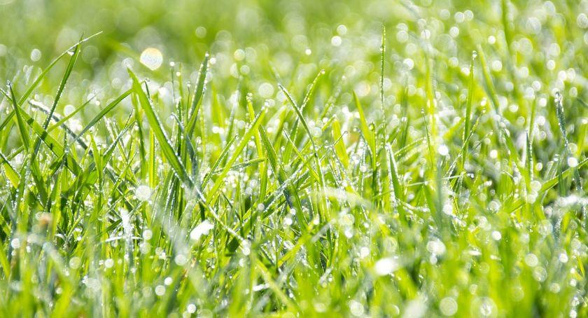 Polecamy, pogoda Wielkanoc Włocławku okolicach - zdjęcie, fotografia