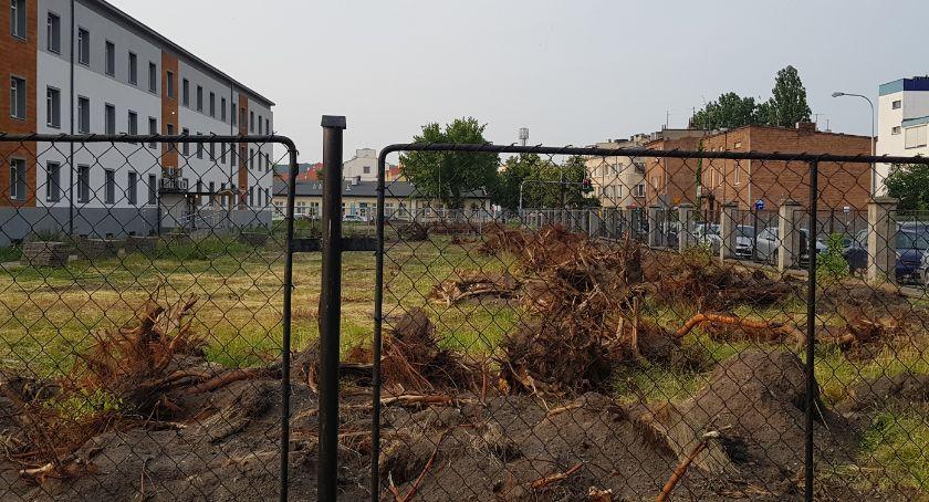 Inwestycje, Wycinka drzew przed Włocławku Dyrektor tłumaczy decyzję - zdjęcie, fotografia