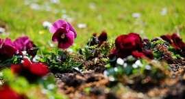 """""""I Love BK"""" będzie witał przyjezdnych. Piękne aranżacje kwiatowe powstają w Grodzie Łokietka"""