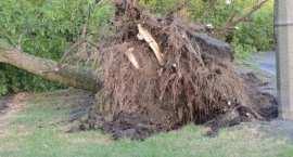 Orkan Ksawery szaleje nad Polską. Skutki silnego wiatru we Włocławku i okolicach