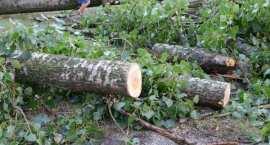 OSTRZEŻENIE: Meteorolodzy prognozują silny wiatr