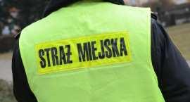 Włocławska Straż Miejska przyjmuje do pracy: są wolne etaty