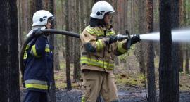 Pożar lasu w Kosinowie w Gminie Włocławek [ZDJĘCIA]