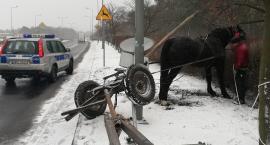 Policyjna pogoń za koniem we Włocławku [ZDJĘCIA]
