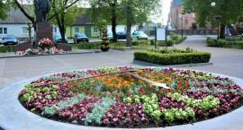 Zegar kwiatowy w Brześciu Kujawskim. Miasto stroi się na letni sezon