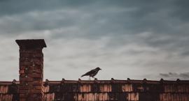 Uczeń Elektryka we Włocławku wynalazł sygnalizator dymu zewnętrznego