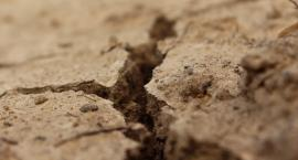 Trwa szacowanie strat wywołanych przez suszę. Będzie pomoc dla rolników?