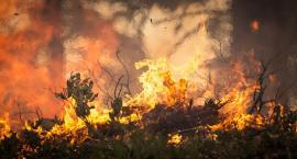 Pożar tartaku w Kowalu. 9 jednostek straży w akcji