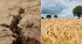 Wnioski susza 2019. Nabór przedłużony. Kiedy pieniądze trafią na konta rolników?