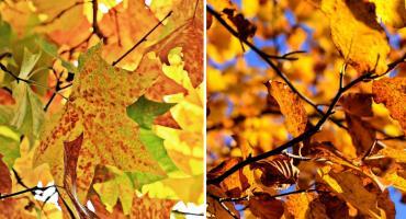 Mamy bardzo ciepłą i piękną złotą jesień. Jak długo jeszcze? [PROGNOZA POGODY]