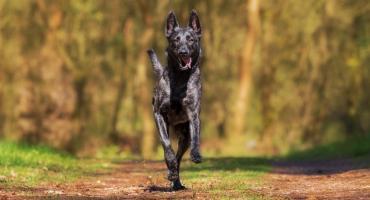 Nawet 5000 zł grzywny za psa bez smyczy. O co chodzi w nowych przepisach?