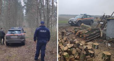 Policja wraz ze strażą leśną łapią złodzieja drzewa [FOTO]