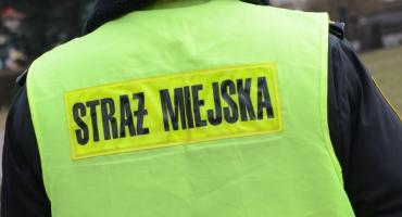 Strażnicy Miejscy zareagowali we Włocławku. 4 osoby zakłócały spokój przy bloku