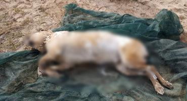 Bestialsko skatowany pies utopiony w Wiśle w Płocku. Miał odrąbany ogon...