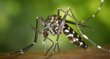 Inwazja komarów w Polsce. Jak jest we Włocławku i okolicach? Jak się bronić?