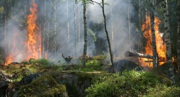 3 stopień zagrożenia pożarowego w Nadleśnictwie Włocławek. Spłonęło 7 hektarów lasu. Kto pali części samochodowe?