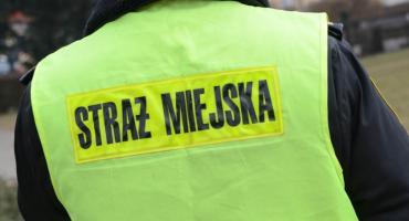 Praca we Włocławku. Nabór do Straży Miejskiej